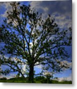 Lonely Tree Metal Print