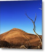 Lonely Bare Tree And Sanddunes Metal Print