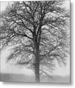 Lonely Winter Tree Metal Print