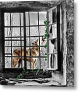 Lonely Wolf Metal Print