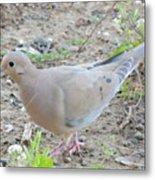 Lonesome Dove Metal Print