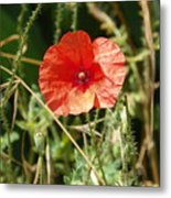 Lonesome Red Poppy Flower Metal Print