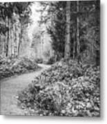 Long And Winding Path Metal Print