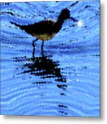 Long-billed Diwitcher Metal Print