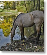Long Drink Metal Print