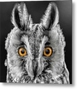 Long Eared Owl 2 Metal Print