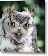 Long Eared Owl In The Trees Metal Print