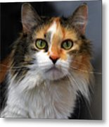 Long Haired Calico Cat Metal Print