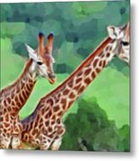 Long Necked Giraffes 2 Metal Print