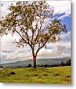 Long Tree Shenandoah Valley West Virginia  Metal Print
