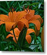 Long Valley Lily Metal Print
