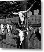 Longhorn Skulls Metal Print