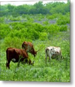 Longhorns - Grazing In The Wilds Metal Print