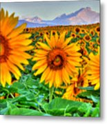 Longs Sunflowers Metal Print