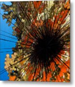 Longspined Sea Urchin Metal Print