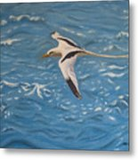 Longtail Over Water Metal Print