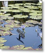 Longwood Lillies Metal Print by Randy Ford
