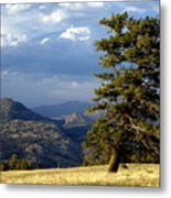 Lonly Tree Metal Print