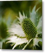 Look But Don't Touch Metal Print