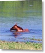 Look Mum I Can Swim. Metal Print