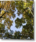 Look Up  Metal Print