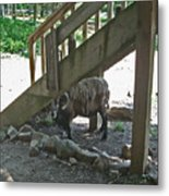 Look Who's Under The Stairs Metal Print