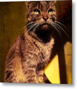 Looking At The Sun Metal Print by Loriental Photography
