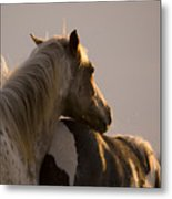 Looking At The Sunset Metal Print