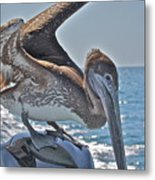 Looking For Leftovers Metal Print
