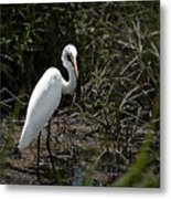 Looking For Lunch Metal Print by Tamyra Ayles
