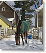 Looking For Stray Hay Metal Print