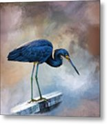 Looking For The Catch Of The Day Metal Print