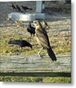 Looking Over The Frenzy Metal Print