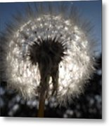 Looking Through A Dandelion Metal Print