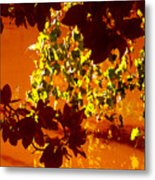 Looking Through Leaves Into Pond Metal Print