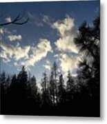 Looking To The Sky Metal Print