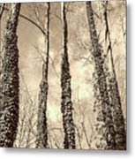 Looking Up Metal Print