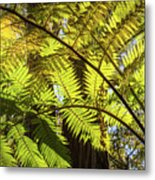 Looking Up To A Beautiful Sunglowing Fern In A Tropical Forest Metal Print