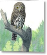 Lookout- Northern Pygmy-owl Metal Print