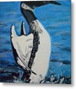 Loon Dance Metal Print