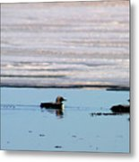 Loon On The Arctic Metal Print
