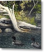 Loons On Saranac Lake Metal Print