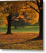 Loose Park Maple Trees Metal Print by Chad Davis