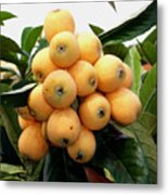 Loquat Exotic Tropical Fruit 4 Metal Print