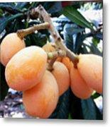 Loquat Exotic Tropical Fruit  Metal Print