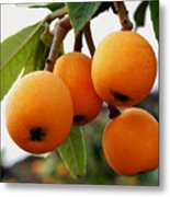 Loquats In The Tree 2 Metal Print