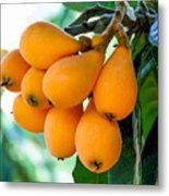 Loquats In The Tree 5 Metal Print