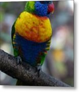 Lorikeet Parrot  Metal Print