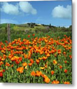 Los Olivos Poppies Metal Print