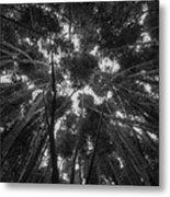 Lost Among The Bamboo Metal Print